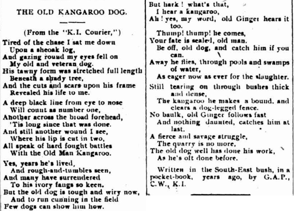Kangaroo Dog Poem
